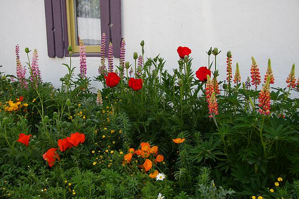 Garden Landscape Photograph - Garden Beauty by Sharon I Williams