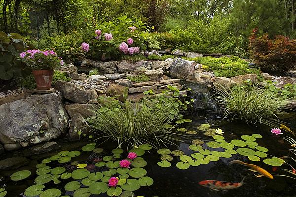 Water Lilly Photograph - Garden Pond - D001133 by Daniel Dempster