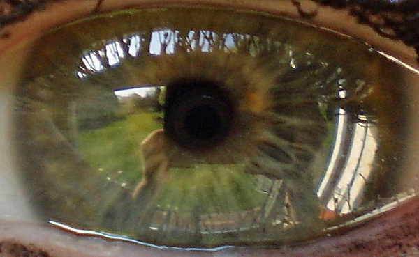 Eye Photograph - Garden Reflected In Eye by Shirley anne Dunne