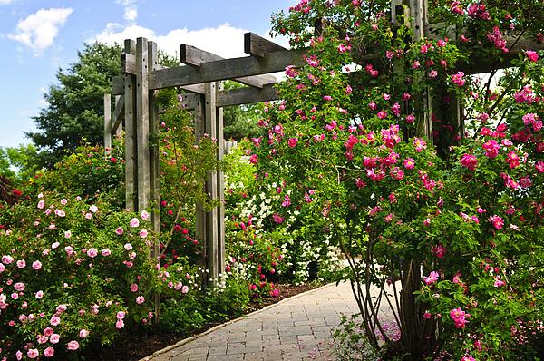 Garden Photograph - Garden With Roses by Elena Elisseeva