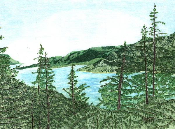 Forest Drawing - Gastineau Gold Mine Juneau Alaska - Www.jennifer-d-art.com by Jennifer Skalecke