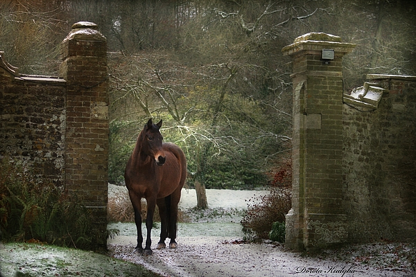 Horse Photograph - Gate To Another World by Dorota Kudyba