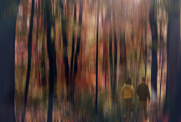 Forest Digital Art - Gateway To A Dream by Robin Webster