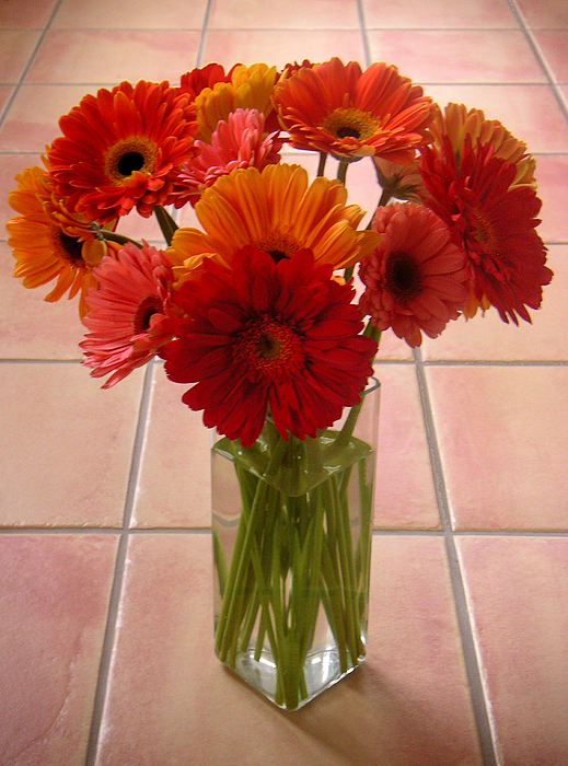 Nature Photograph - Gerbera Daisies - On Tile by Lucyna A M Green