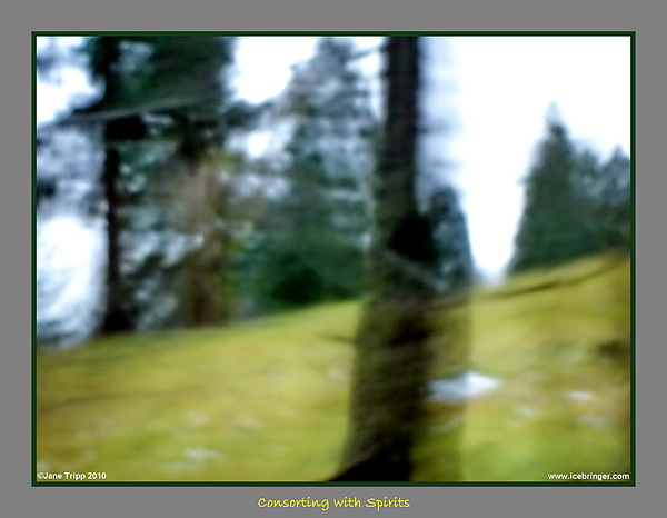 Ghost Photograph - Ghost Behind Tree by Jane Tripp