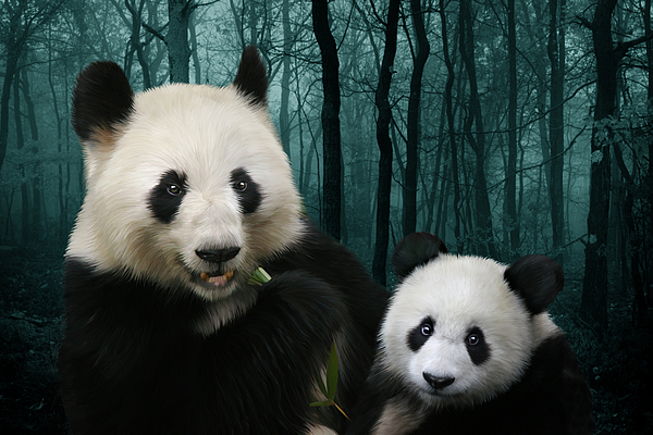 Panda Digital Art - Giant Pandas by Julie L Hoddinott