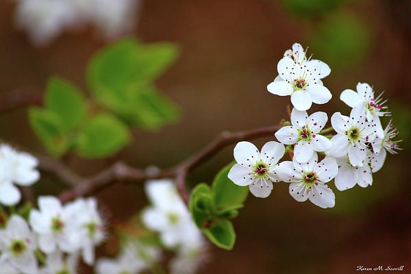 Flower Photograph - Gift Of Light by Karen M Scovill