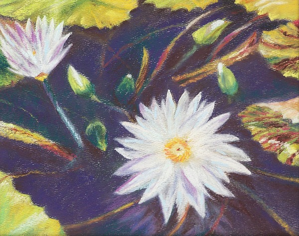 Longwood Gardens Pastel - Gilding The Lily by Laura McMillan