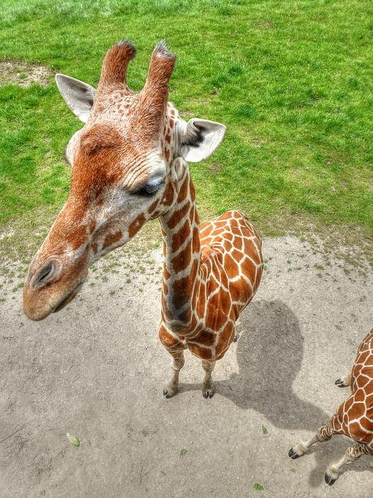 Giraffe Photograph - Giraffes Point Of View by Michael Garyet