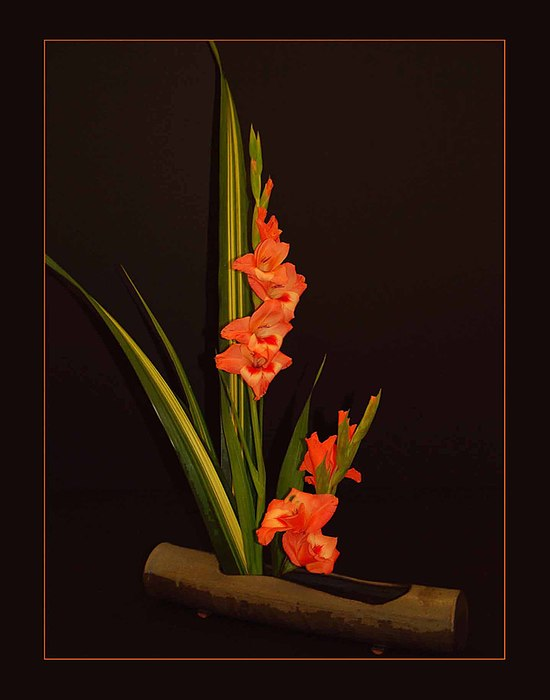 Gladiola Photograph by Joseph Martin