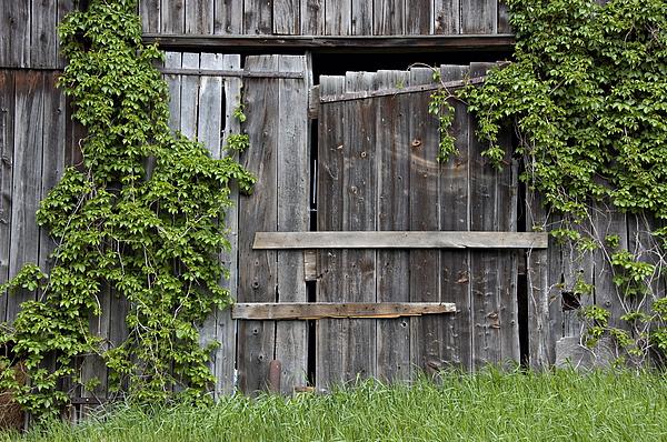 Barn Doors Photograph - Glengarry Barn Doors by Jacqueline Milner