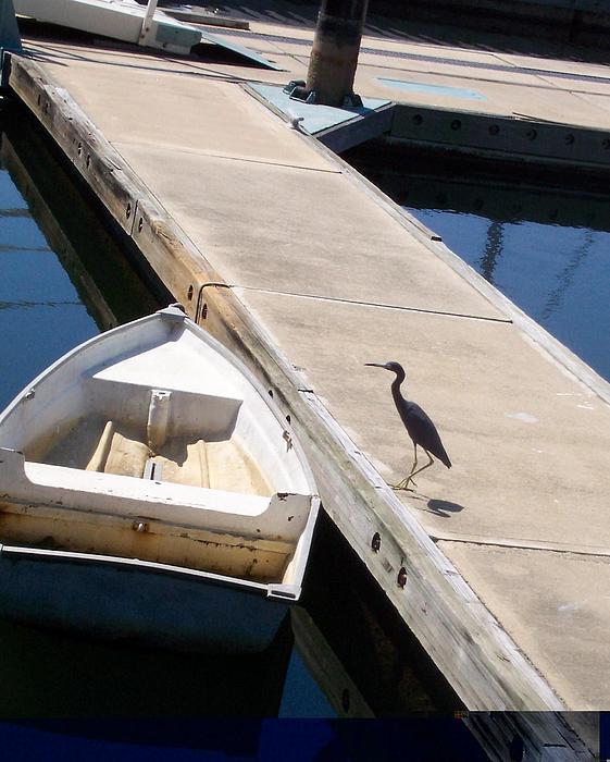 Heron Photograph - Going Fishing by James Johnstone