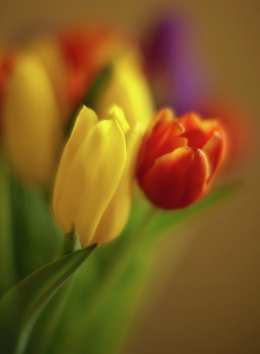Tulip Photograph - Golden Bouquet by Mike Reid