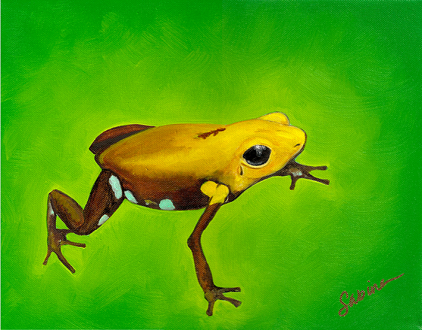 Frog Painting - Golden Frog Of Supata by Sabina Espinet