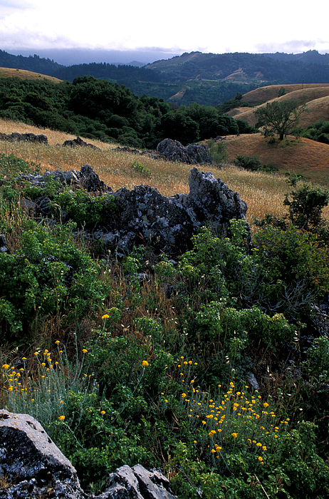 Landscape Photograph - Golden Hills Of Summer by Kathy Yates