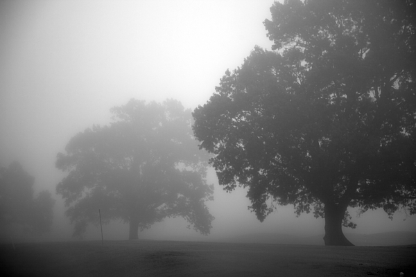 Tree Photograph - Golf Course With Fog by Amanda Barcon