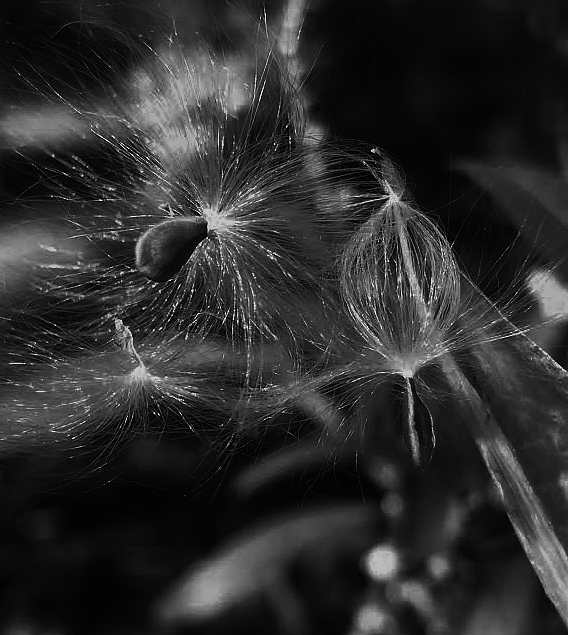 Bnw Photograph - Gone...with The Wind by Tara Miller