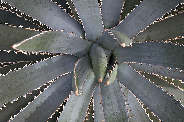 Nature Photograph - Gonna Eat You by Robert Joseph