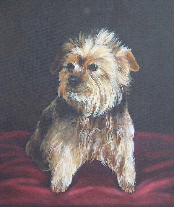 Pet Portrait Painting - Gonzo by Janice M Booth
