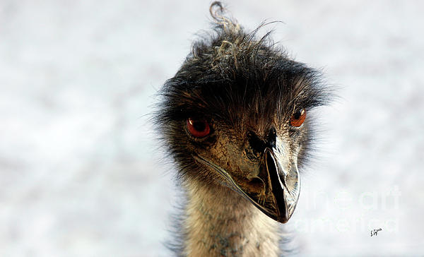 Ostrich Photograph - Good Morning Beautiful  by Steven Digman