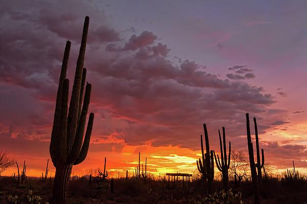 Tucson Photograph - Goodnight Tucson by Ryan Seek