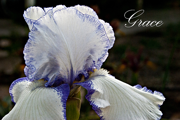 Iris Photograph - Grace by Christopher Gaston