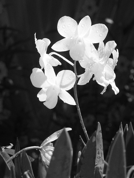 Flower Photograph - Grace by Jim Derks