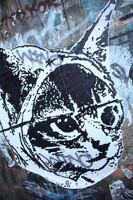 Photographer Photograph - Graf Cat by Jez C Self