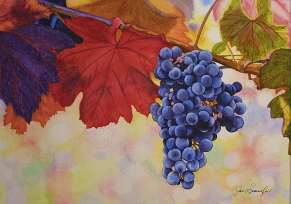 Watercolor Painting - Grape Harvest by Jan  Spangler