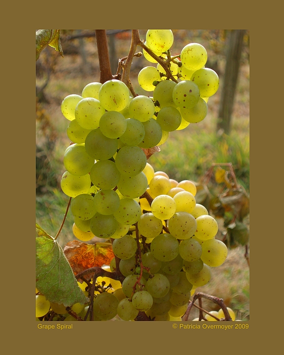 Grapes Photograph - Grape Spiral by Patricia Overmoyer