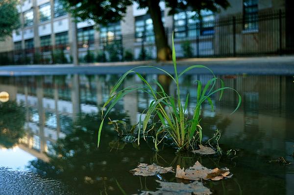 Grass Photograph - Grass Sprout by Brynn Ditsche