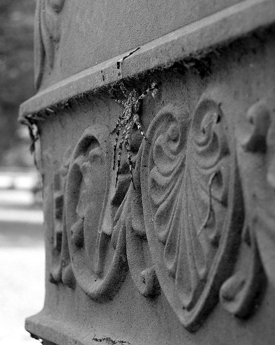 Photograph Photograph - Grave Crawler by Lindsey Orlando