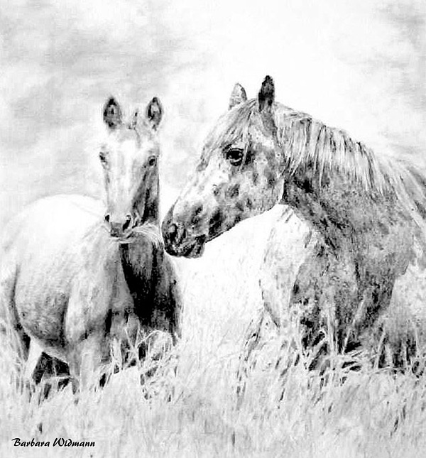 Horses Drawing - Grazing by Barbara Widmann