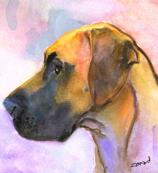 Great Dane Painting - Great Dane by Mary Jo Zorad