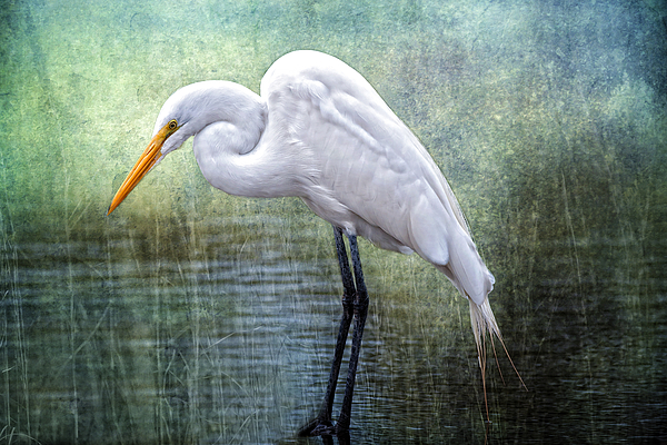 Egret Photograph - Great White Egret by Bonnie Barry