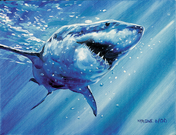 Great White Shark Painting - Great White Shark by Matthew Milone