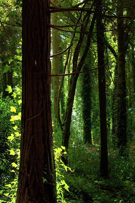 Autumn Photograph - Green Forest by Carlos Caetano