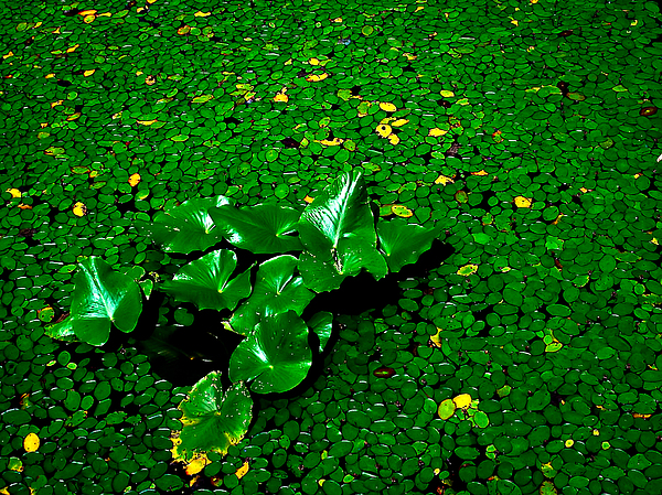 Plants Photograph - Green On Green by Ron Plasencia