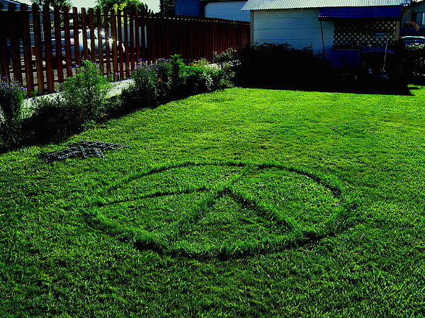 Peace Photograph - Green Peace by Nancy Ippolito