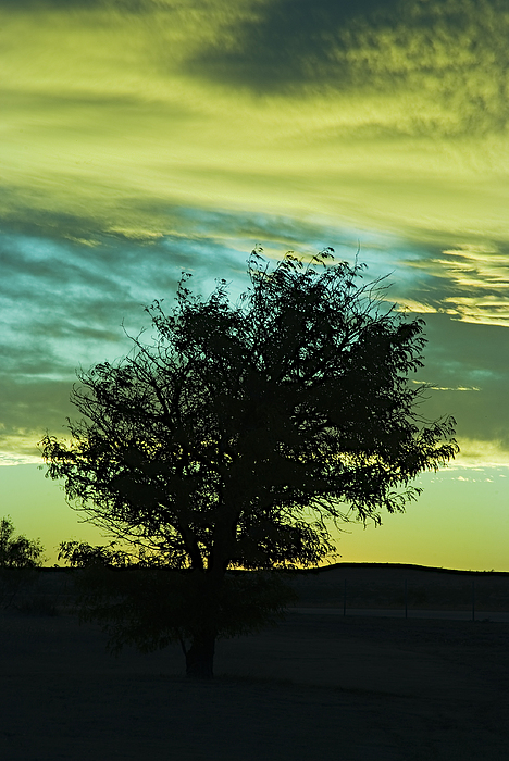 Sunset Photograph - Green Sunset by Terry Wieckert