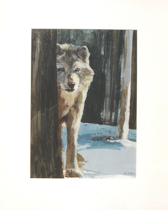 Wolf Painting - Grey Wolf by Steve Greco