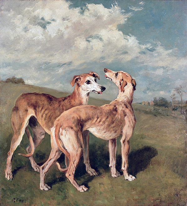 Greyhounds (oil On Canvas) By John Emms (1843-1912) Painting - Greyhounds by John Emms