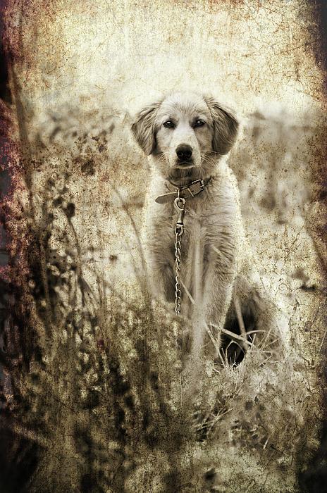 Aged Photograph - Grunge Puppy by Meirion Matthias