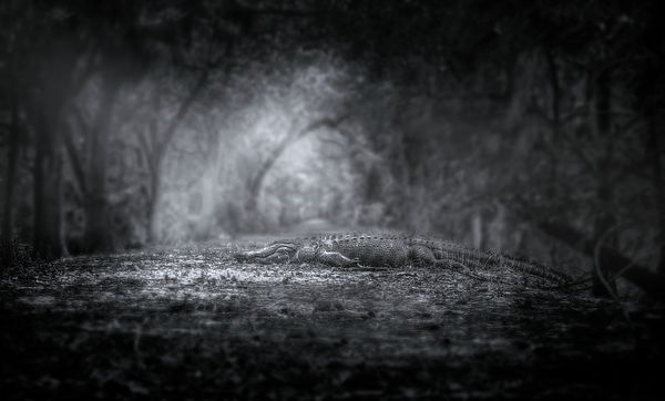 Alligator Photograph - Guardian Of The Forest by Mark Andrew Thomas