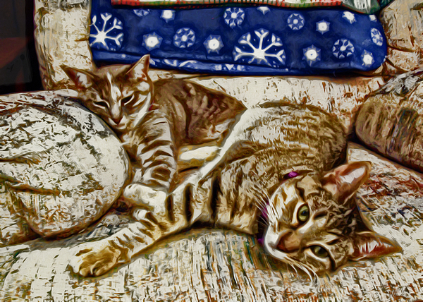Cat Photograph - Happy Together by David G Paul
