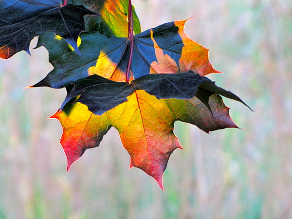 Photography Photograph - Harbinger Of Autumn by Sean Griffin