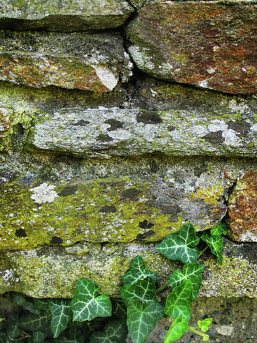 Stone Photograph - Hard Life by Eena Bo