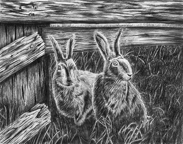 Rabbit Drawing - Hare Line  by Peter Piatt