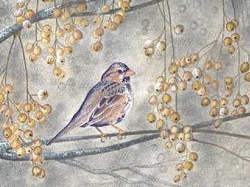 Bird Painting - Harris Sparrow by Elizabeth H Tudor