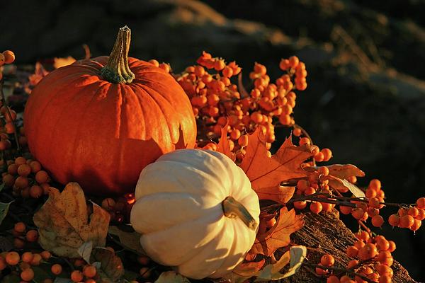 Autumn Photograph - Harvest Colors by Sandra Cunningham